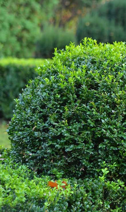 John And Floyd Lawn Care Services, Inc Shrubs & Hedges