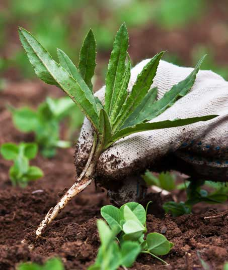 John And Floyd Lawn Care Services, Inc Weed Control services